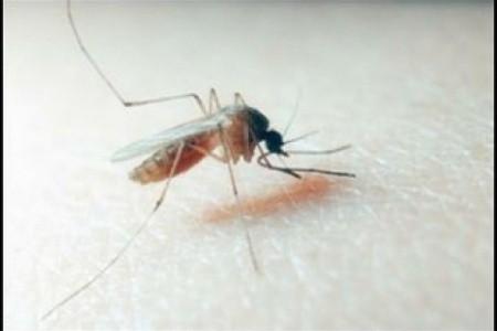 Contrasto del virus West Nile: nuove misure in atto insieme agli Enti Locali e punto della situazione dalla Regione